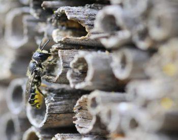 Hoe hang je een insectenhotel op?